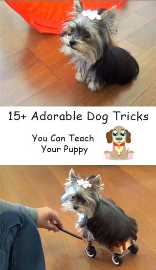 15 adorable dog tricks you can teach your puppy #dogtricks #puppylove