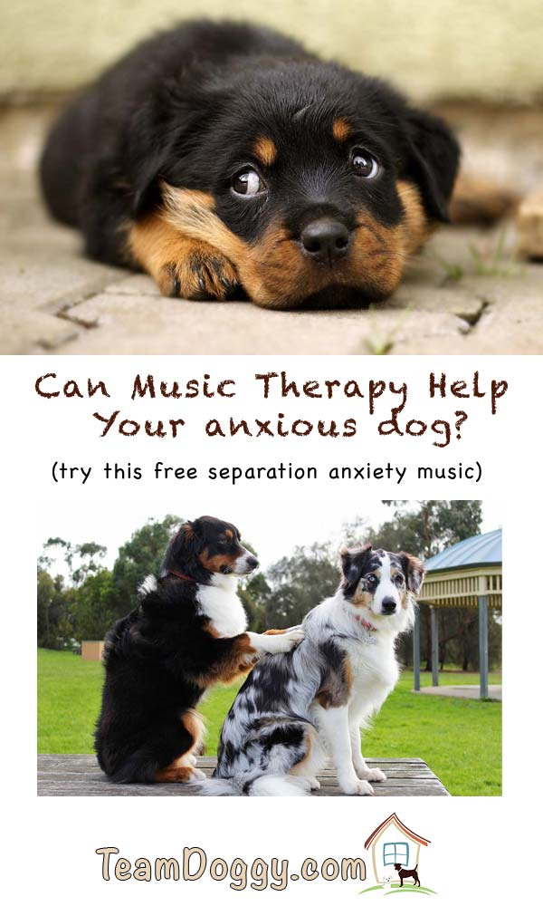 Music therapy for dogs helps separation anxiety #dogtraining