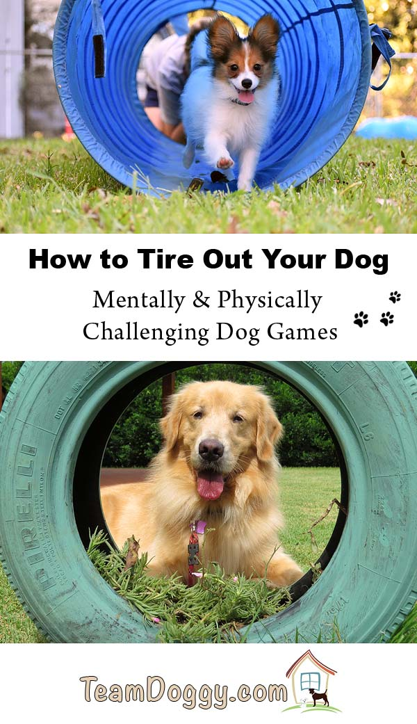 Creative ways to tire out your very active dog. These dog games are mentally and physically challenging. #dogtraining #doggames