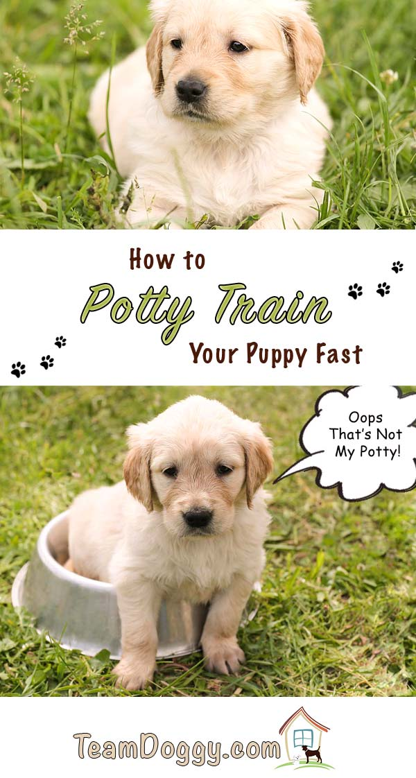 Potty training a puppy fast is a sanity saver for owners and the lovable pup. #dogtraining #puppypottytraining
