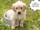 Tips for potty training your puppy #puppytraining #dogs