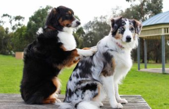 Special relaxing music for dogs helps with many axiety issues #musictherapy #separationaxiety