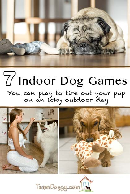 7 Indoor dog games to exercise an active dog #doggames #newpuppy #dogtraining