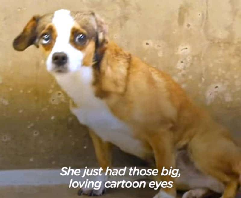 Blossom the rescue dog shows off her cartoon eyes