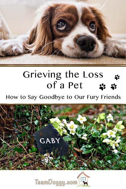 Grieving the loss of a pet dog, cat or other lovable friend takes time. These tips can help you get through the tough times. #dogloss #petloss