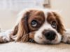 Grieving the loss of a pet can be difficult
