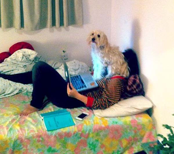 Laptop face sit. Does your dog have no respect for personal space?