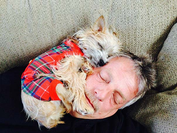 This cute Yorkie loves to face cuddle