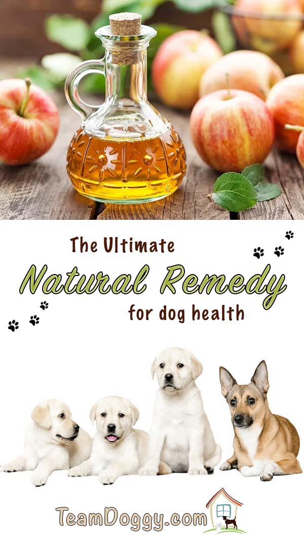 Using Apple cidar vinegar for dogs is a fantastic natural remedy for your dogs' health #doghealth #pethealth