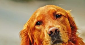 Does your dog suffer from diarrhea? Find out how to help your dog