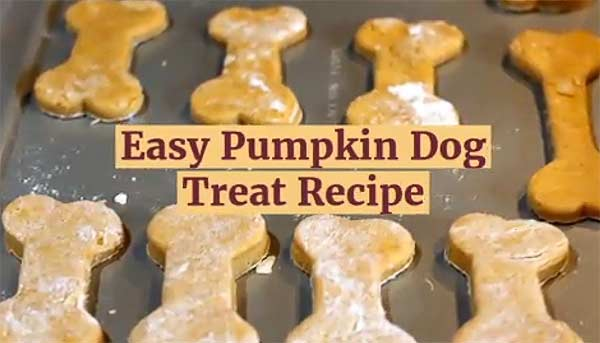 Easy pumpkin dog treat recipe to spoil your dog with a natural dog treat