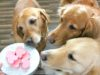 Easy Valentine's Day dog treats you can make at home #dogtreats #naturaldogtreat