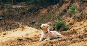 Discover why dogs eat dirt and other odd things