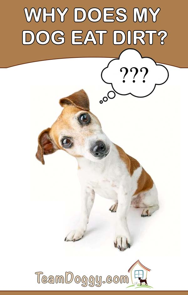 If you have wondered why does my dog eat dirt this article may help you find the answer
