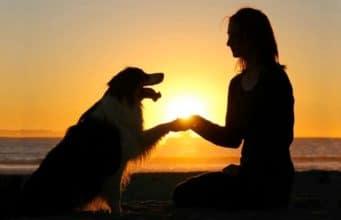 Secret the Australian Shepherd does yogo like a pro. #dogtraining #yoga