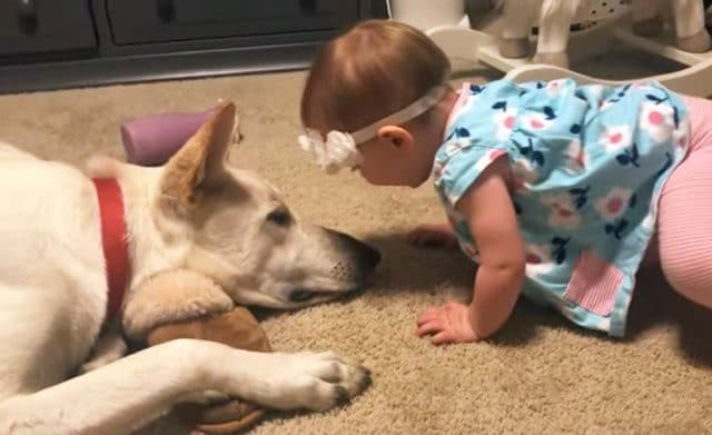 baby and German Shepherd meat for the 1st time