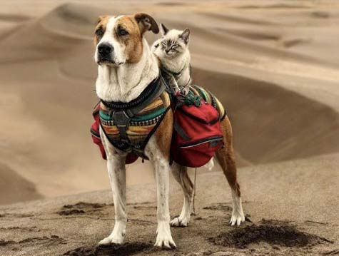 Cat and dog travel partners for life