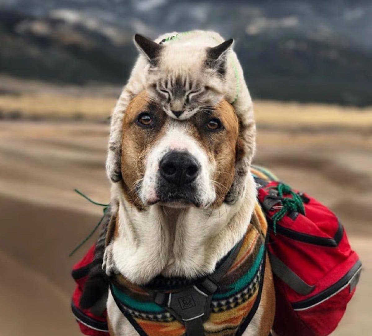 hiking buddies for life