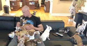 Strong man adopts a house full of little dogs