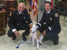 brave firemen save puppy