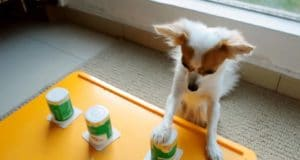 Dog plays the shell guessing game like a pro