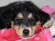 How do dogs get parvo? FAQ and answers on parvo in dogs