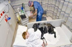 Loyal Companion Stays By His Human Brother's Side