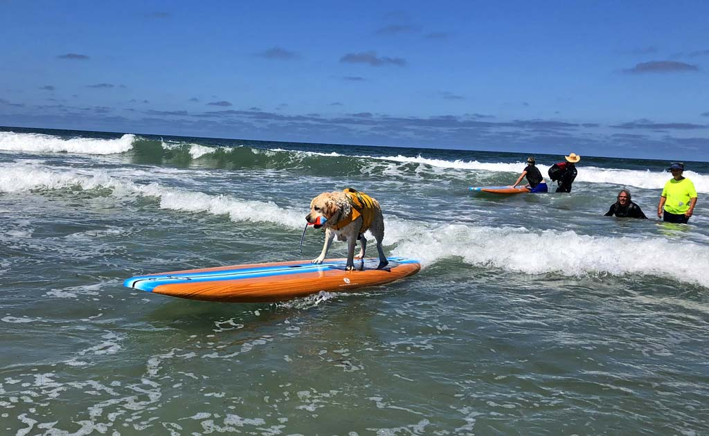 Doggy loves to surf