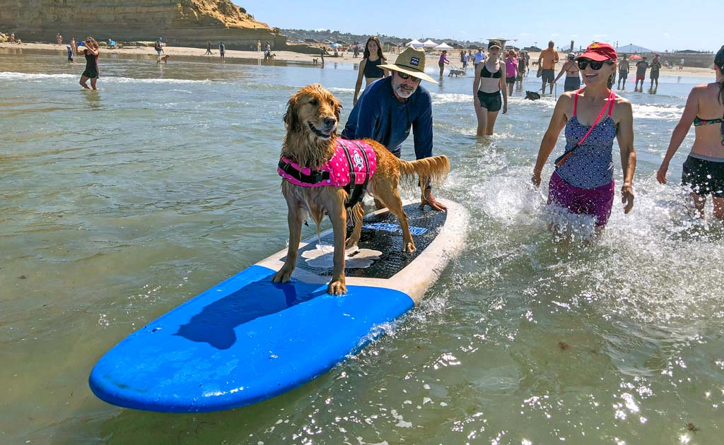 Rosie the dog enjoys surfing lessons