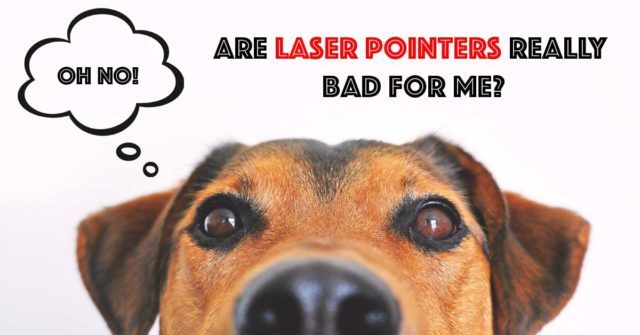 Laser pointer games can be dangerous fo dogs