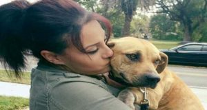 Pregnant dog rescued and finds a loving home