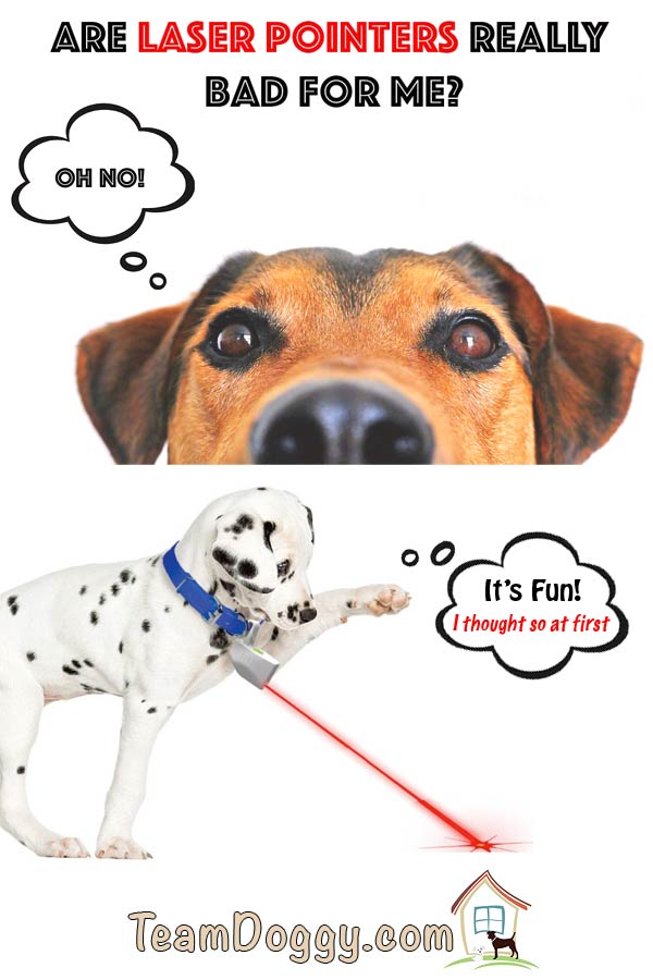 Are laser pointers bad for dogs? It turns out they can cause long term problems