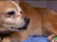 Old dog is saved by a genrous vet more concerned for the health of animals