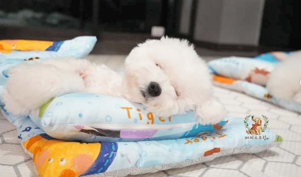 Cute white puppy tucked into bed