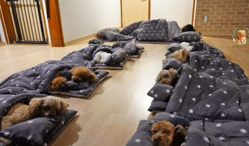 Dogs having nap time in sleeping bags