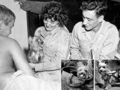 Smokey was a famous dog during World War 2 and considered the first therapy dog