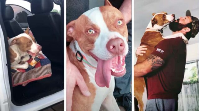 Lost dog jumps into new family