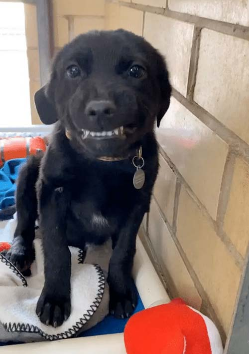 Shelter puppy flashes the cutest smile