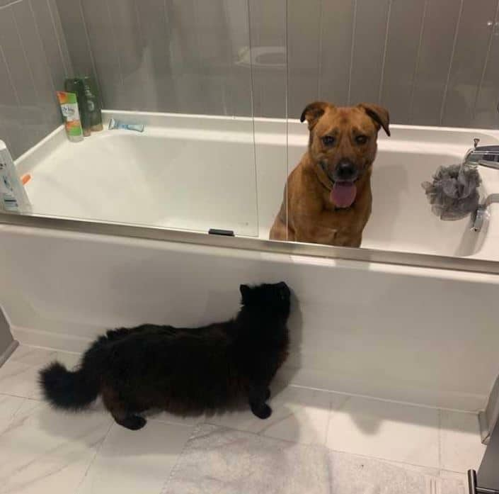 moose and marvin hide in the shower