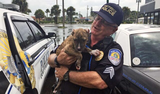 Police Officer Saves Puppy from Hurricane Dorian
