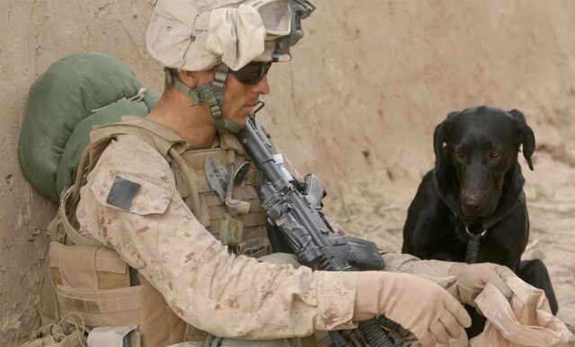 Soldier Rescues Dog While on Duty Reunites With Him at Home