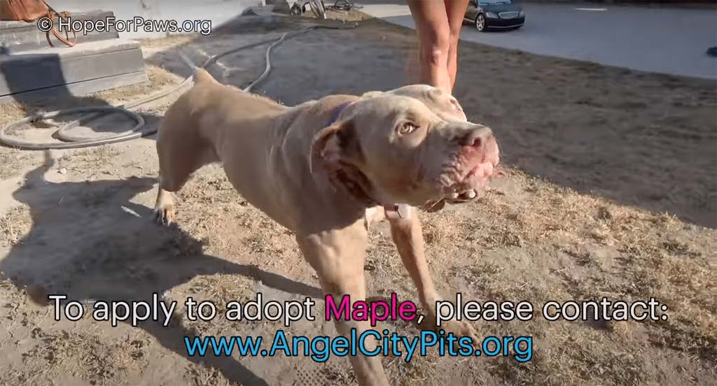 Adopt a dog at Angel City Rescue