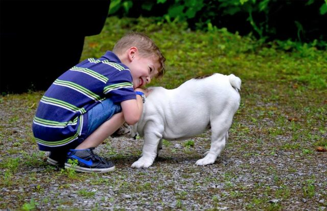 Spoiled yet lovable Bulldog plays with his brother