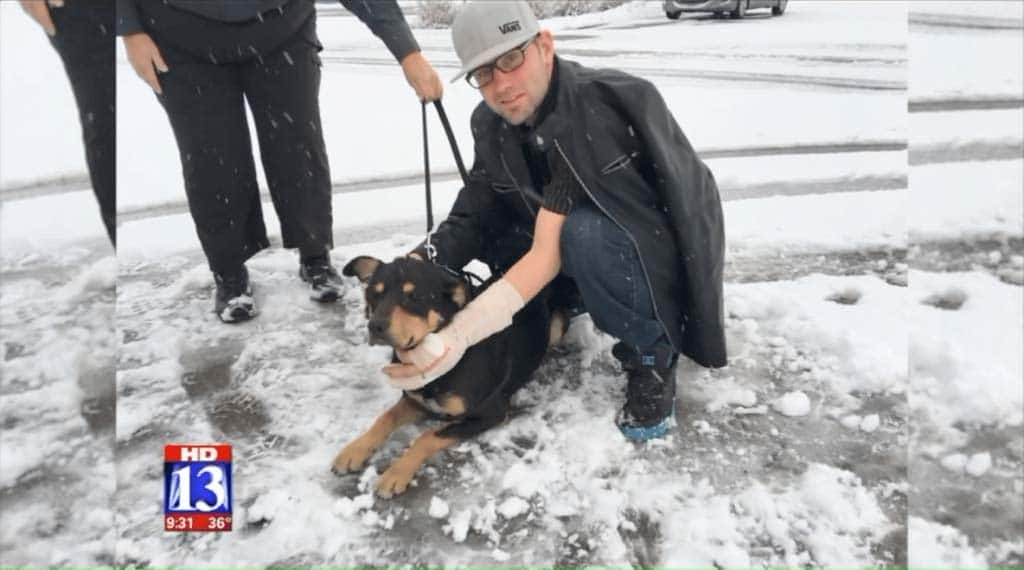 Dog rescued from accident using social media