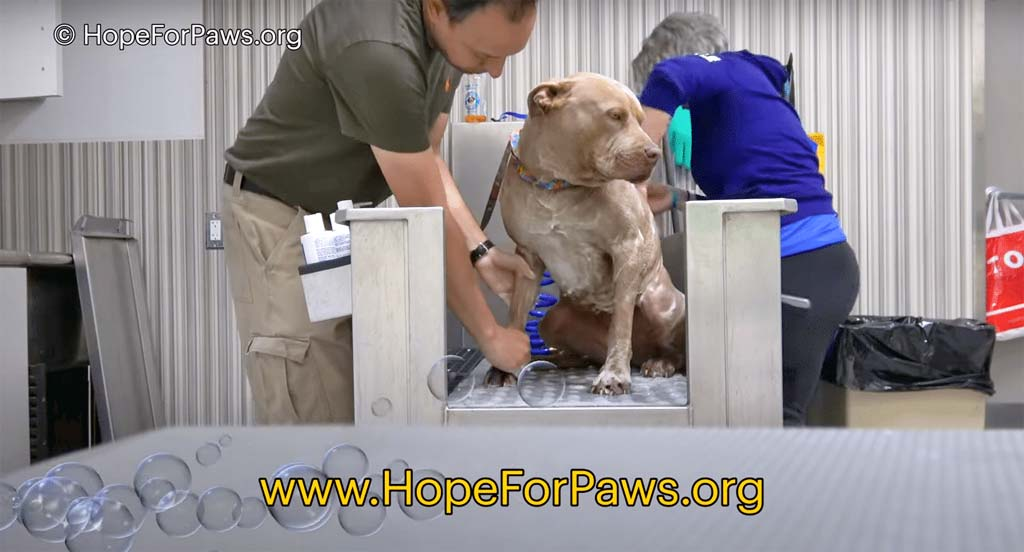 Saving Maple at Hope for Paws Rescue Center