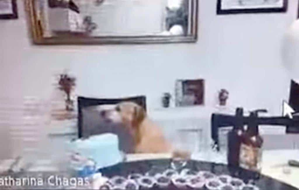 Sneaky dog takes the cake live on video