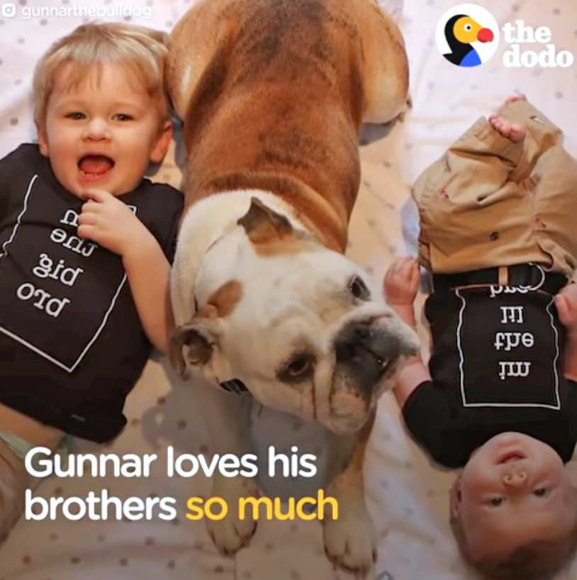 Gunnar Loves His Brothers So Much