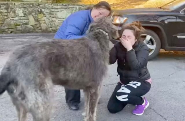 Woman's Reaction After Reuniting With The Dog She Thought Was Lost Forever