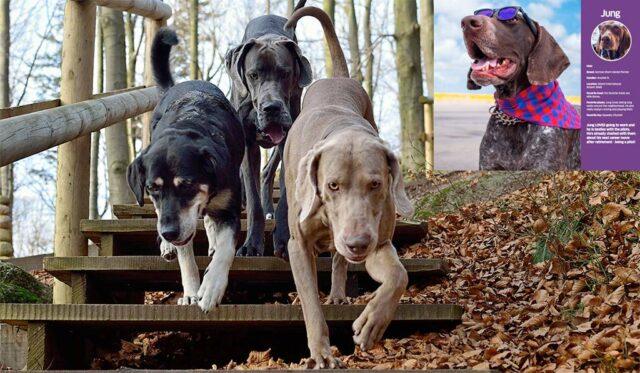 tsa calendar featuring working dogs