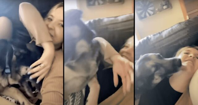 This playful German Shepherd only wanted to give his mom kisses
